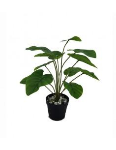 Planta flor saco
